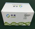 非洲豬瘟疫病毒(ASFV)檢測整體解決方案