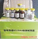 犬内皮素1(ET-1)ELISA试剂盒