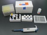 人白介素17(IL-17)ELISA试剂盒