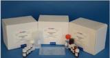 玻璃珠DNA胶回收试剂盒