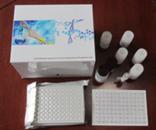 CaN试剂盒,人钙调磷酸酶ELISA试剂盒价格