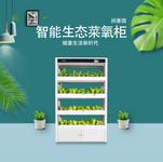 全智能生態菜氧柜 無土栽培設備 智能生態消毒凈化柜 中國制造潤康園