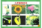 初中植物教学挂图