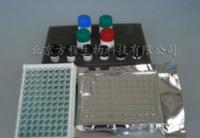 大鼠血红素氧合酶1(HO-1)酶联免疫ELISA试剂盒
