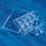PET膜细胞培养插入皿