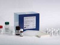 人大皰性類天皰瘡抗體(BP)ELISA Kit