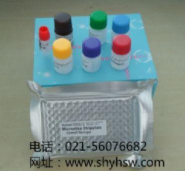 p38 MAP Kinase  ELISA试剂盒