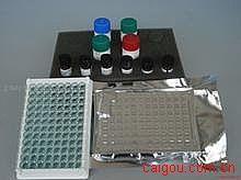 人肾素(Renin)ELISA试剂盒