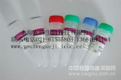 人肌球蛋白轻链激酶(MLCK)ELISA Kit