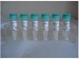 进口标准品头孢克肟杂质E