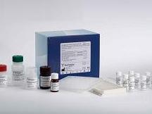 人碱性成纤维细胞生长因子4(bFGF-4)ELISA试剂盒