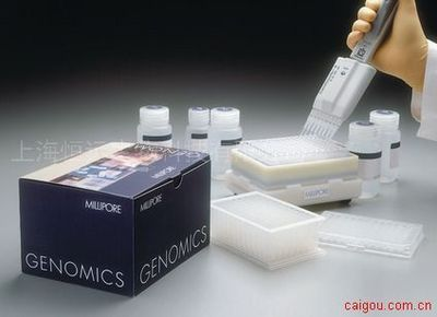 人空肠弯曲菌黏附蛋白ELISA试剂盒