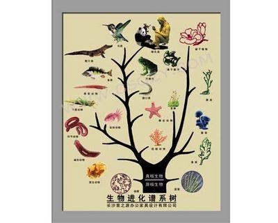 青之源小学科学实验室之生物进化树光电显示箱
