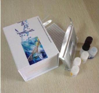 热休克转录因子2(HSF2)检测试剂盒(酶联免疫吸附试验法)