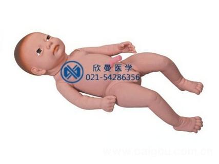 婴儿附脐带模型