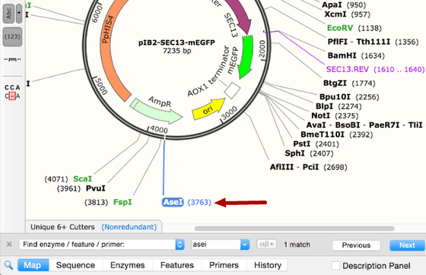 SnapGene——酶、特征或引物的查询