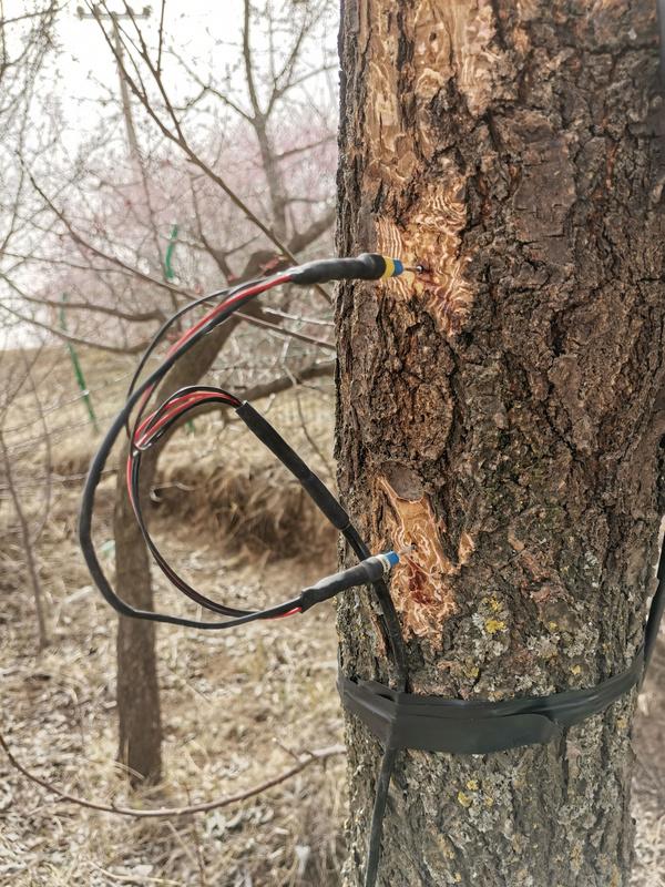 宁夏农科院荒漠化所植物成长测量系统安装调试成功