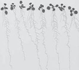 WinRHIZO根系分析系统