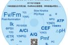 泽泉科技最新发布《7400 篇光合作用文献数据库》