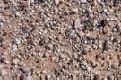 SPECIM IQ揭示进化的秘密—利用手持高光谱在非洲沙漠研究石头花