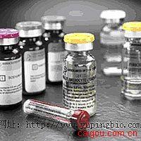 人登革热IgG(Dengue IgG)ELISA试剂盒