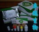 人结蛋白(Des)Elisa试剂盒