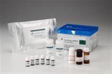小鼠骨粘连蛋白(ON)ELISA 试剂盒