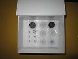 胶质细胞系来源的神经营养因子ELISA试剂盒厂家代测,进口人(GDNF)ELISA Kit说明书