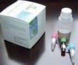 人CC趋化因子受体1(CCR1)ELISA试剂盒