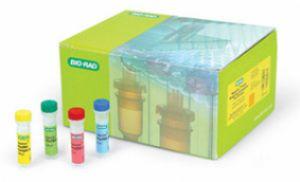 人睫状神经营养因子(CNTF)ELISA试剂盒