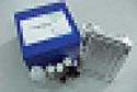 待测大鼠肿瘤坏死因子相关凋亡诱导配体3(TRAIL-R3)ELISA试剂盒价格