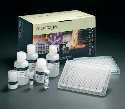 大鼠去氢表雄酮(DHEA-S)ELISA试剂盒