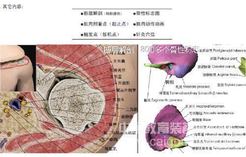 医学三维交互式人体解剖系统