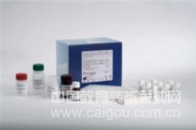 马β淀粉样蛋白1-40(Aβ1-40)ELISA Kit
